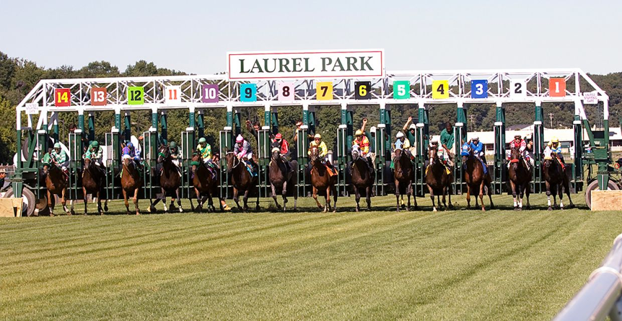 laurel turf start